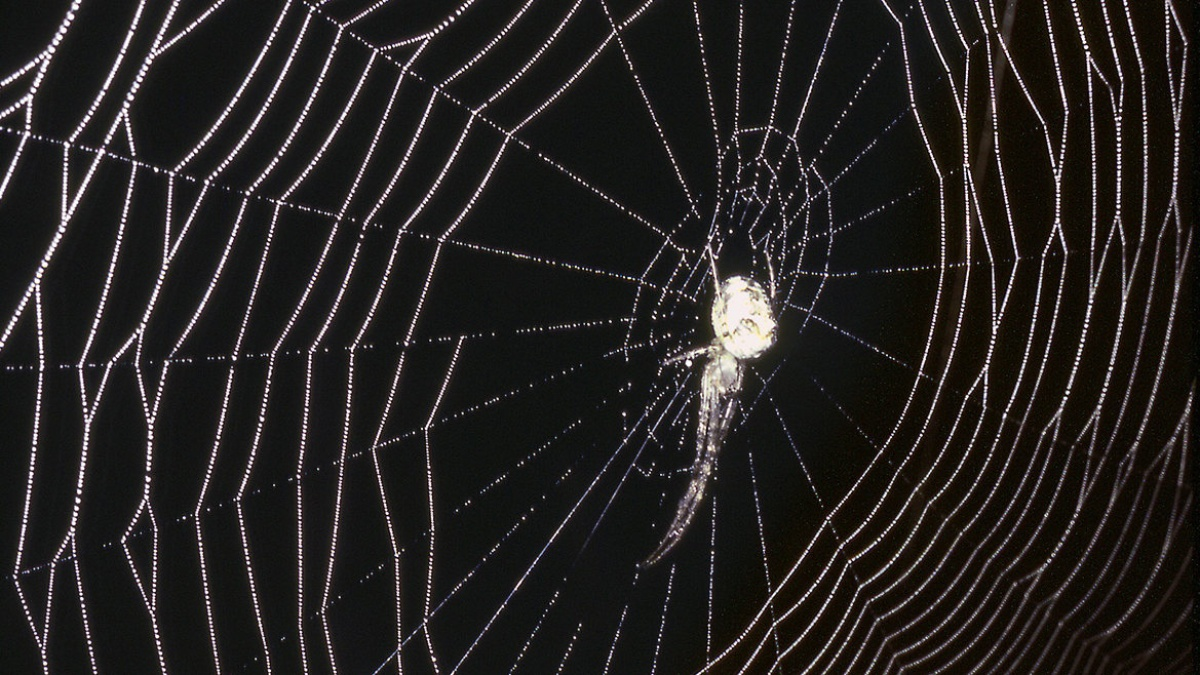 Design in nature: spider's web